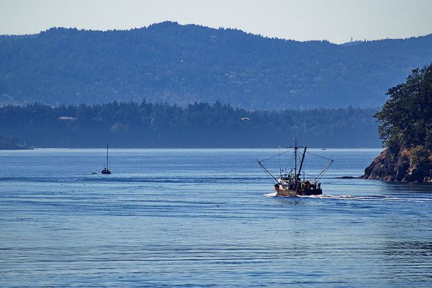 Fishing boat in waters with forested mountains behind.