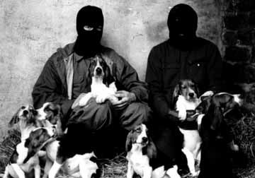 An ALF raid removing 82 beagles and 26 rabbits from Interfauna in Cambridge on St Patrick's Night 1990.