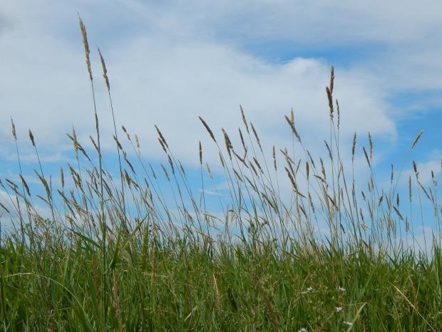 prairie-873906_1920